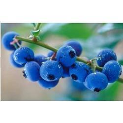 叶黄素、好眼力视光科技(优质商家)视疲劳  好眼力蓝莓叶黄素图片