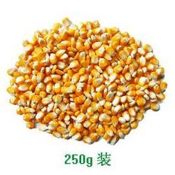 收购玉米大麦-新疆收购玉米-宏发科技图片