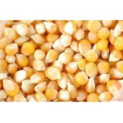 收购玉米豆粕-山东收购玉米-宏发科技(查看)图片