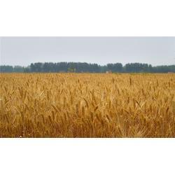 求购小麦豆粕,咸宁求购小麦,宏发科技(查看)图片