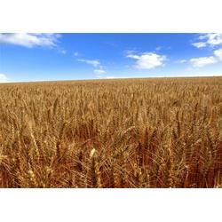 宏发科技 收购玉米单价-襄阳收购玉米图片