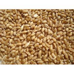 宏发科技(图)|高价收购小麦|内蒙古收购小麦图片