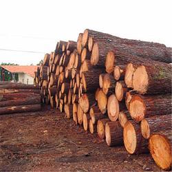 铁杉方木报价-铁杉方木-日照友联木材加工图片