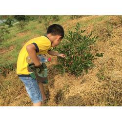 亲子活动流程|襄樊亲子活动|森众教育图片