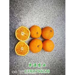 果源农业▲深受欢迎,甜橘柚苗,甜橘柚图片