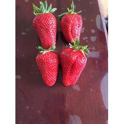 桃熏白草莓苗怎么种_乾纳瑞农业(在线咨询)_淄博草莓苗
