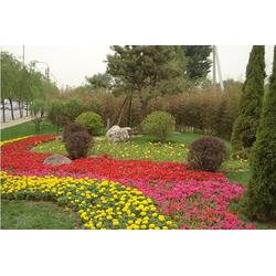 植栽花卉,植栽花卉,芳青花卉苗图片