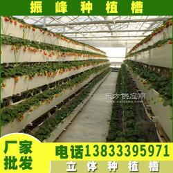 草莓立体式无土栽培种植槽 草莓栽培槽厂家图片