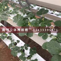 种植槽 种植育苗槽厂家图片