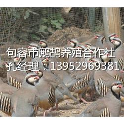 句容鹧鸪养殖(图)_鹧鸪养殖前景_平湖鹧鸪养殖图片