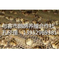 珍禽养殖_句容鹧鸪养殖_镇江珍禽养殖图片
