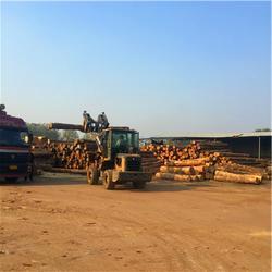 建筑木方长度-建筑木方-中林木业(查看)图片