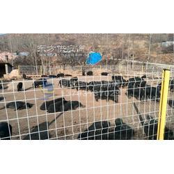 養殖隔離網-監獄防護網華久圖圖片