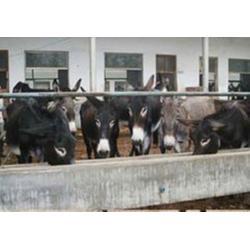 万隆畜牧养殖-济宁肉驴-肉驴养殖图片