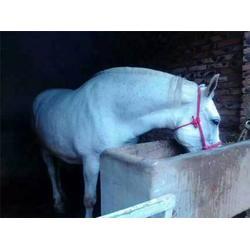 河北肉马,万隆牧业(优质商家),肉马养殖场图片