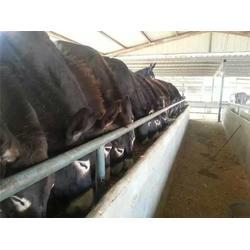 万隆畜牧养殖,肉马利润,重庆肉马图片