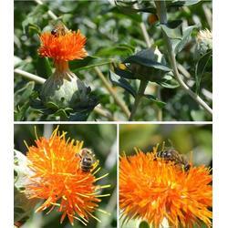 嵊州市蜂蜜、你好蜜蜂、蜂蜜柚子茶图片