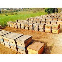 兴山县蜂蜜,你好蜜蜂,蜂蜜的作用与功效图片