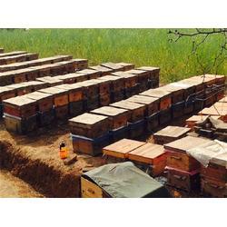 纯蜂蜜多少钱一斤|纯蜂蜜(在线咨询)|安吉县蜂蜜图片