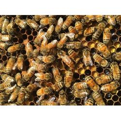 蜂蜜_你好蜜蜂_牛奶蜂蜜图片