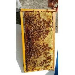 你好蜜蜂 柠檬蜂蜜水的功效-精河县蜂蜜图片