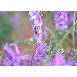蜂蜜、你好蜜蜂、蜂蜜减肥法图片