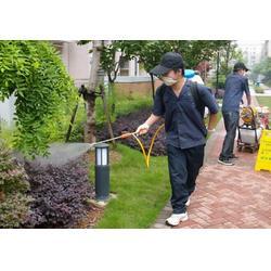 福州白蚁药水、白蚁、福州白蚁公司图片