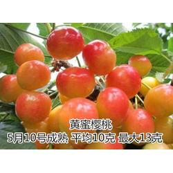 泰山苗木基地、樱桃苗、哪里有】卖大樱桃苗图片
