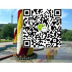卫矛|卫矛树春(在线咨询)|薛城区卫矛图片