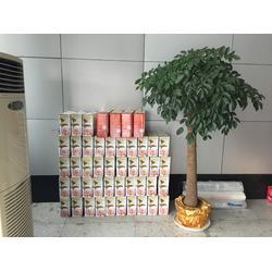 过年送藕,汉川藕御莲藕种植场,过年送藕供应图片