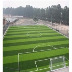 东莞足球场、通宝体育、人造草足球场图片