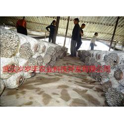 夏季平菇栽培、岁岁丰(在线咨询)、湖南平菇栽培图片