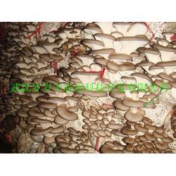 西藏食用菌栽培技术-北京食用菌栽培技术-岁岁丰(优质商家)图片