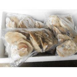 牡蛎肉_万斛食品_日照牡蛎肉供应商图片