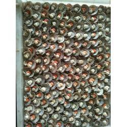 扇贝加工厂家,万斛食品(在线咨询),镇江扇贝图片
