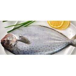 山东鲳鱼供应商-鲳鱼-万斛食品图片