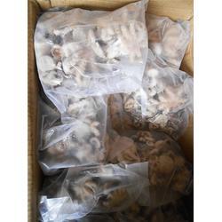 万斛食品 章鱼销售厂家-南通章鱼图片