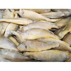水产哪家好,冰鲜黄花鱼商,冰鲜黄花鱼图片