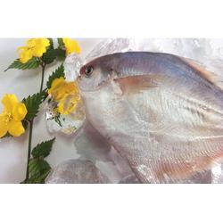 冰冻鲳鱼_鲳鱼_万斛食品图片