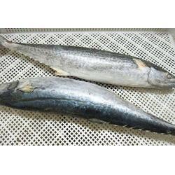 日照鲅鱼出口厂家,鲅鱼,万斛食品图片