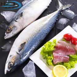 速冻鲅鱼生产厂家、万斛食品、鲅鱼图片