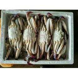 速冻梭子蟹,速冻梭子蟹供应商,万斛食品(优质商家)图片