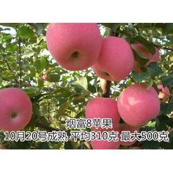 淄博苹果苗,苹果苗多少钱一颗,晨旭泰山苗木更为优秀图片