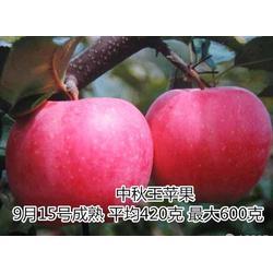 苹果苗_泰山苗木言而有信_苹果苗样板图图片