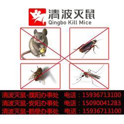 灭四害服务公司-鹤壁灭四害-清波灭鼠图片