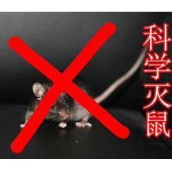 灭蟑灭鼠公司|濮阳清波灭鼠(在线咨询)|鹤壁灭鼠公司图片