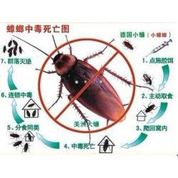 上门消灭蟑螂、安阳县灭蟑螂、清波有害生物防治公司(查看)图片