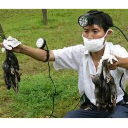 鹤山区灭鼠公司,濮阳清波灭鼠,哪家灭鼠公司好图片