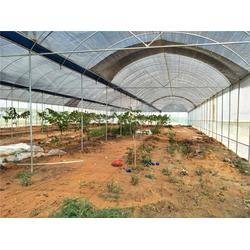 蔬菜大棚,温室大棚工程施工,温室大棚工程图片