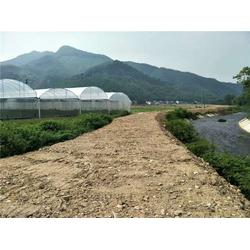 芳诚13年(图)、农业温室大棚设计、农业温室大棚图片